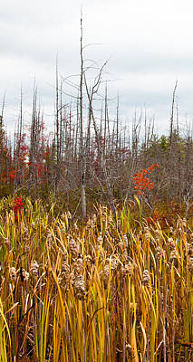 Photograph - The Cattails Near Raquette Lake New York by David Patterson