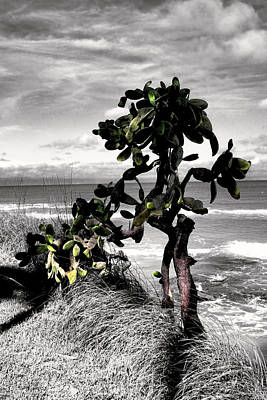 Photograph - The Catus Tree Siesta Key Florida by Tom Prendergast