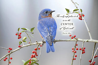 Bluebird Of Happiness Photograph - The Center Of God's Will by Bonnie Barry
