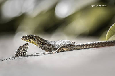 Art Print featuring the photograph The Charming Lizards by Stwayne Keubrick