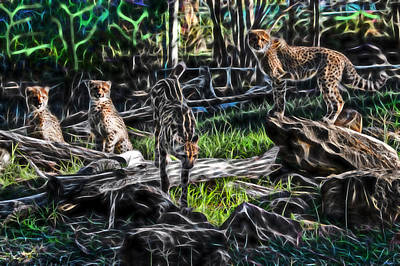 Photograph - The Cheetah Dubbo Zoo Family by Miroslava Jurcik