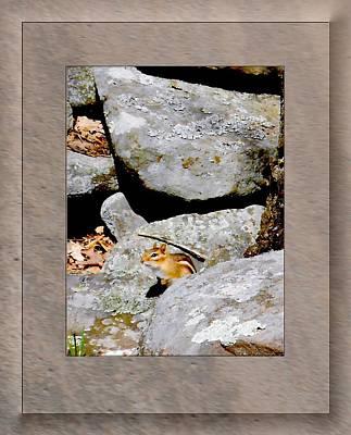 The Chipmunk Art Print by Patricia Keller