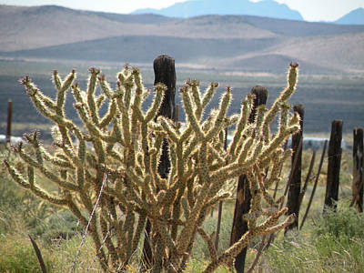 Photograph - The Cholla Cactus View by Becky Erickson