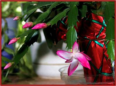 The Christmas Cactus Art Print by Jim  Darnall