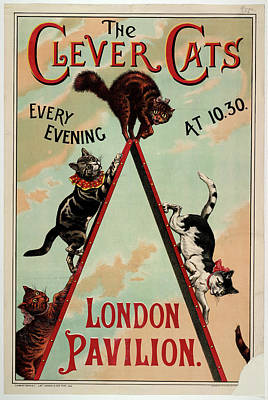 Miscellaneous Photograph - The Clever Cats by British Library