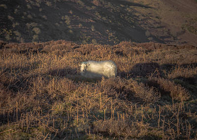 Mill Valley Photograph - The Cloud Sheep by Chris Fletcher