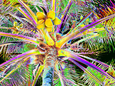 The Coconut Tree Art Print