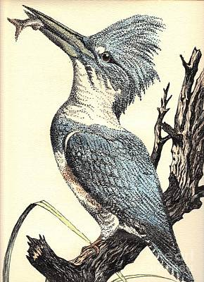 The Collared Kingfisher Art Print