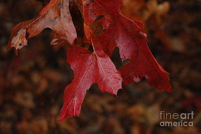 The Color Of Fall Art Print by Art Hill Studios