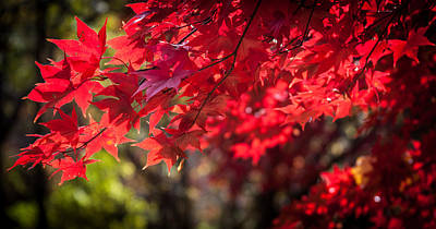 The Color Of Fall Art Print by Patrice Zinck