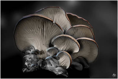 Photograph - Painted Fungus by Wayne King