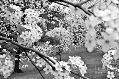 The Color Of Spring Art Print by Jay Nodianos