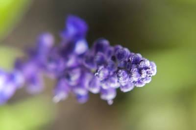 Photograph - The Color Purple by Jean-Noel Nicolas
