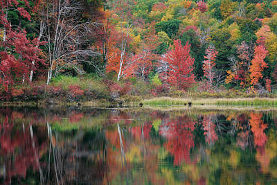 Forests Photograph - The Colors Of Autumn by Bill Wakeley