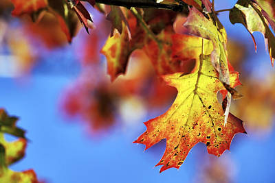 Photograph - The Colors Of Autumn by Jason Politte