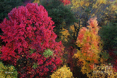 The Colors Of Fall Art Print by E B Schmidt