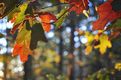 Photograph - The Colors Of Fall by Terry DeLuco