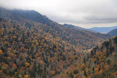 The Colors Of The Smokies Print by Dan Sproul