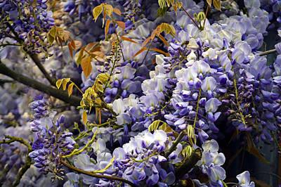 The Colours Of Spring. Original