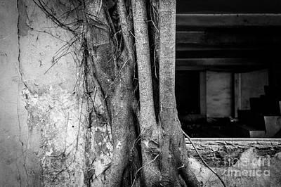 Photograph - The Comeback by Dean Harte