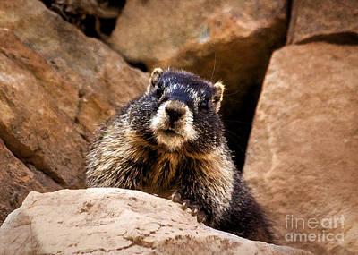 Animal Behavior Painting - The Comical Marmot by Janice Rae Pariza