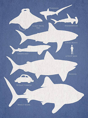 Great White Shark Digital Art - The Comparison by Aged Pixel