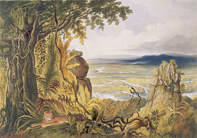Leopard Drawing - The Comuti Or Taquiare Rock by Charles Bentley