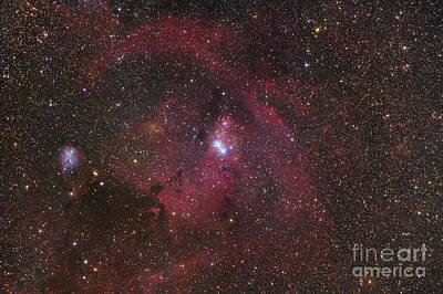 Monoceros Photograph - The Cone Nebula Region In Monoceros by Robert Gendler