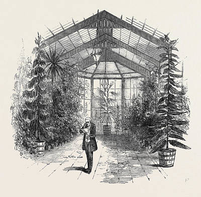 Conservatory Drawing - The Conservatory At Stratfieldsay by English School