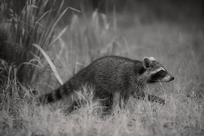 Photograph - The Coon Walk by Kim Henderson