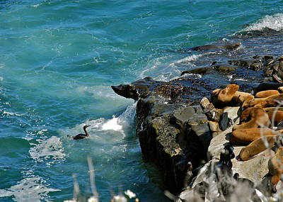 Photograph - The Cormorant That Could by Kirsten Giving