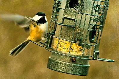 Fluttering Photograph - The Corn Feeder by Diana Angstadt