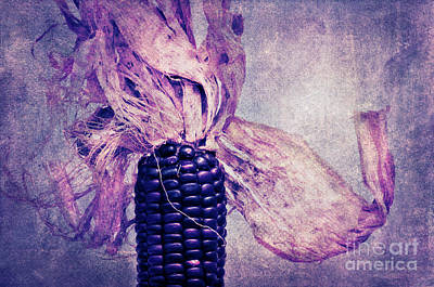 The Corn On The Cob II Art Print by Angela Doelling AD DESIGN Photo and PhotoArt