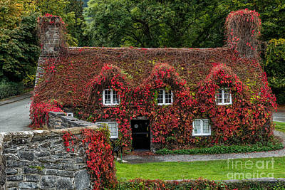 Vines Photograph - The Cottage by Adrian Evans