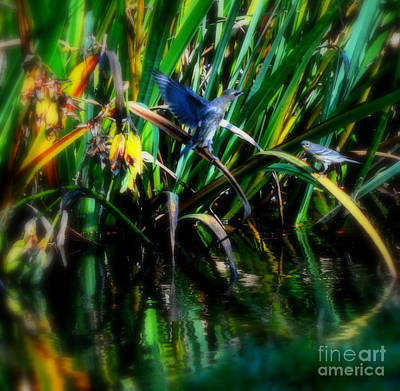 Photograph - The Courting by Heather L Wright