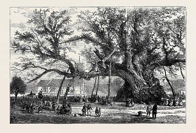 The Cowthorpe Oak, Near Wetherby Art Print
