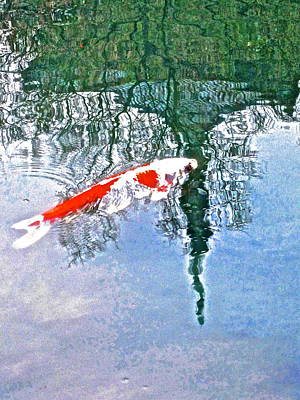 Photograph - The Coy Koi - 11 by Larry Knipfing