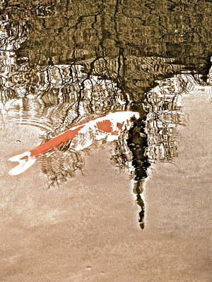 Photograph - The Coy Koi - 16 by Larry Knipfing