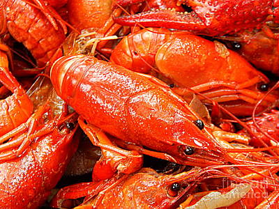 Photograph - The Crawfish Boil Heads Or Tails In New Orleans Louisiana by Michael Hoard