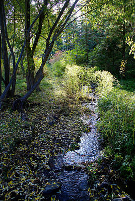 Photograph - The Creek At Finch Arboretum 2 by Ben Upham III