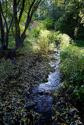 Photograph - The Creek At Finch Arboretum by Ben Upham III