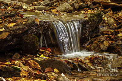 Photograph - The Creek by Debra Crank