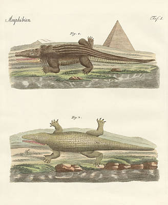 The Crocodile Art Print