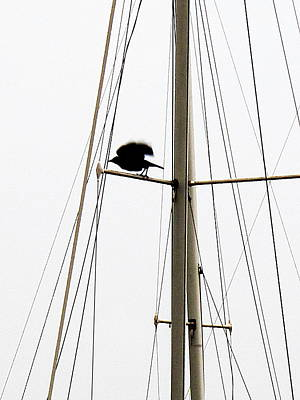 Art Print featuring the photograph The Crow Leaving The Absent Crows Nest by John King