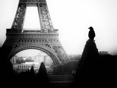 Eiffel Tower Photograph - The Crow by Thierry Boitelle