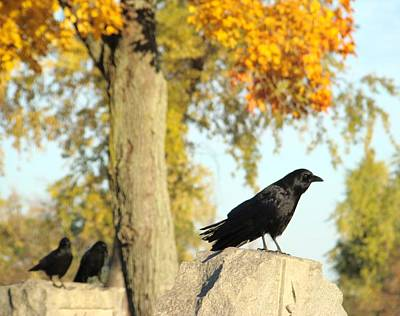 The Crows Are Goth Art Print by Gothicrow Images