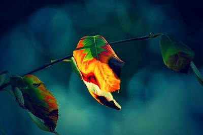 Photograph - The Cubist Leaf by Beth Akerman