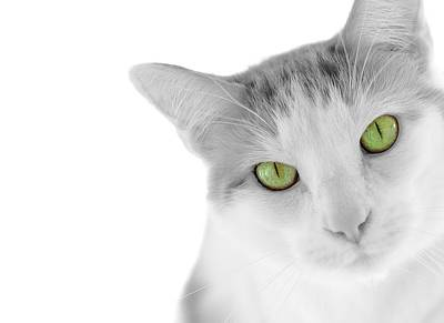 Green Eyes Photograph - The Curious Cat by Jim Hughes