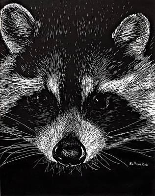 Raccoon Mixed Media - The Curious Raccoon by Nathan Cole
