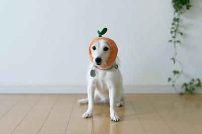 The Cute Dog With A Tangerine Cap Art Print by Hazelog